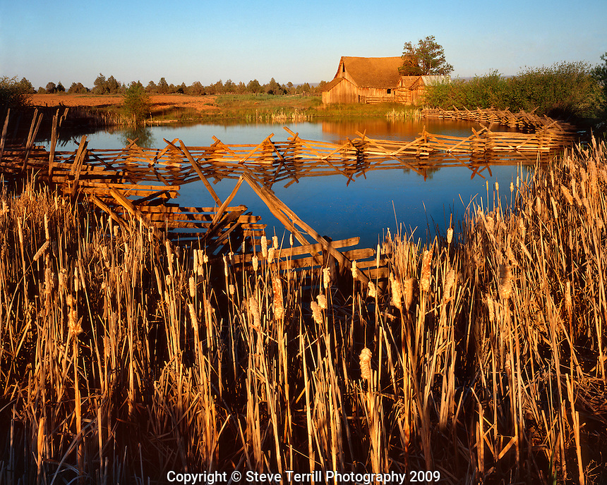 Rual barn with cattail lined pond in evening light in Wasco County Oregon