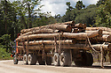 Logged rainforest timber on truck, Sabah, Borneo, Malaysia.