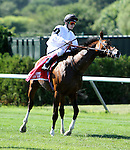 July 05, 2014: Toast of New York with Jose Ortiz in of the Grade I Belmont Derby Invitational Stakes for 3-year olds, going 1 1/4 mile on the inner turf at Belmont Park. Sue Kawczynski/ESW/CSM