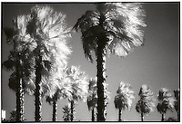 Palm trees along roadway<br />