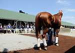 LOUISVILLE, KY -MAY 20: Kentucky Derby and Preakness winner Justify arrives at Churchill Downs (Louisville, Kentucky) the day after his victory in the second leg of the Triple Crown. (Photo by Mary M. Meek/Eclipse Sportswire/Getty Images)