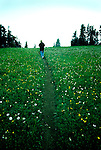 Hiker on a trail wandering through a Hurricane Ridge meadow of wildflowers, into fog toward an unseen drop into the Elwa River Valley.  Olympic National Park, Wasnington. Olympic Peninsula