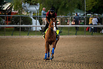 LOUISVILLE, KY - MAY 02: Justify with Humberto Gomez up gallops in preparation for the Kentucky Derby at Churchill Downs on May 2, 2018 in Louisville, Kentucky. (Photo by Alex Evers/Eclipse Sportswire/Getty Images)