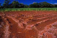 Sugar cane field (furrows) of Gay & Robinson Plantation near Salt ponds, Hanapepe, Kauai south shore.