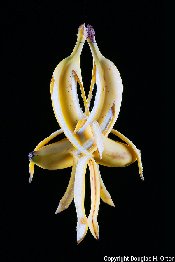Portrait of a Banana twisting on a string.  Multiple Exposure