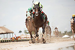 HALLANDALE BEACH, FL- APRIL 02: #5 Valid with jockey Nik Juarez up wins the Skip Away Stakes on a sloppy track at Hallandale Beach, Florida. (Photo by Arron Haggart/Eclipse Sportswire/Getty Images)