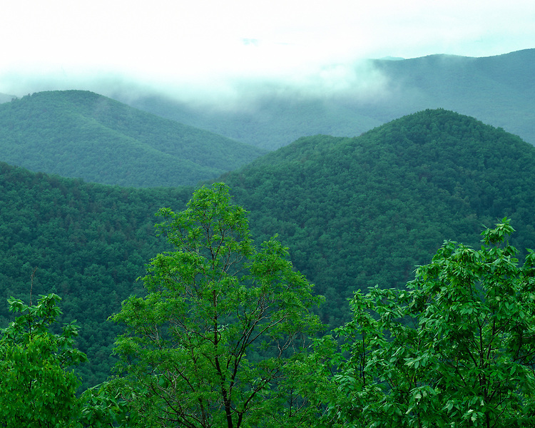 View of the Blue Ridge Mountains from Rocky Top Overlook; Shenandoah National Park, VA