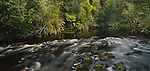 Pegasus Creek in Stewart Island Rakiura National Park. New Zealand.