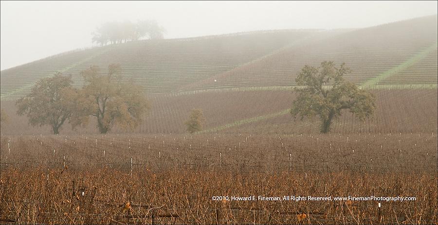 Fog rolling down hillside vineyards along Cal Rte 12 in Sonoma