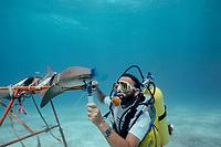 Dr. Samuel H. Gruber (U. Miami) uses dye filament to study respiratory flow and olfaction of nurse shark, Ginglymostoma cirratum, Bahamas, Caribbean Sea, Atlantic Ocean