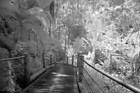 Hawaii Tropical Botanical Garden, Hilo, Hawaii, Big Island of Hawaii