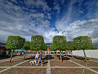 Square shaped trees in the SA1 area of Swansea, Wales, UK. Sunday 16 May 2021
