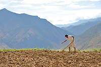 Wumu Village, Yulong County, Yunnan Province, China - Dongba priest He Jixian of the Naxi ethnic group plants seeds at his field, June 2019