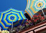Umbrellas in Seattle 2