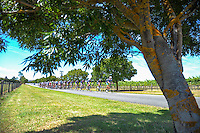 Competitors cycle past Martinborough vineyards during stage three of the NZ Cycle Classic UCI Oceania Tour in Wairarapa, New Zealand on Tuesday, 24 January 2017. Photo: Dave Lintott / lintottphoto.co.nz