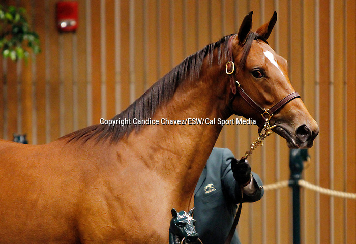 September 15, 2015: Hip 452 Bodemeister - Mining My Own filly consigned by Betz Thoroughbreds.  Mining My Own is also the dam of Mine That Bird, and Dullahan.   Candice Chavez/ESW/CSM