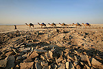 In the past the salt blocks (called amolé) were used through-out Ethiopia as money. the salt trade itself remains the main livelihood of the northern Afar