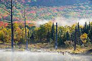 Autumn foliage around Wildlife Pond in Bethlehem, New Hampshire USA on a foggy autumn morning.