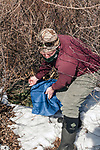 New Hampshire Fish and Game Biological Technician, Brett Ferry retreives a trap from under new forest habitat with a New England cottontail rabbit inside the Great Bay National Wildlife Refuge, vertical.