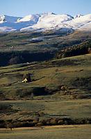 Europe/France/Auvergne/63/Puy-de-Dôme/Parc Naturel Régional des Volcans/Monts Dores: Paturages et buron en fond le massif du Sancy
