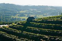 Vignes des Côteaux du Saillant