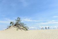 Wanderdüne Nagliu auf der kurischen Nehrung, Litauen, Europa , UNESCO-Weltkulturerbe