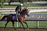 OCT 27 2014:Valiant Emilia-PER, trained by Gary Mandella, exercises in preparation for the Breeders' Cup Distaff at Santa Anita Race Course in Arcadia, California on October 27, 2014. Kazushi Ishida/ESW/CSM