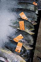 commercial fishing, dolphinfish or mahi mahi or dorado, Coryphaena hippurus, United Fish Agency auction fish market, Oahu, Hawaii, Pacific Ocean