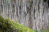 Winter Trees - California