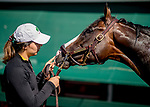 May 15, 2019 :  War of Will shares a moment with groom Samantha Bussanich as he gets a bath after exercising as horses prepare for Preakness Week at Pimlico Race Course in Baltimore, Maryland. Scott Serio/Eclipse Sportswire/CSM