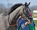 March 27, 2021: Spritz #5 finished 2nd in the Bourbonette Oaks on Jeff Ruby Steaks Stakes Day at Turfway Park in Florence, Kentucky. Jessica Morgan/Eclipse Sportswire/CSM