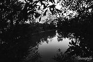 Image Ref: W016<br /> Location: Wandin<br /> Date: 6th April 2014