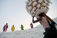 INDIA Madhya Pradesh , organic cotton project bioRe in Kasrawad  , storage for harvested cotton at ginning factory | INDIEN Madhya Pradesh , Lagerplatz und Entkernungsfabrik der bioRe India , Projekt fuer biodynamischen Anbau von Biobaumwolle in Kasrawad