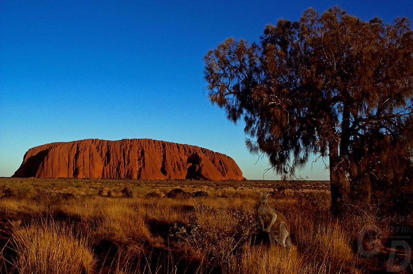Composite - AYERS ROCK AND KANGAROO, AUSTRALIA