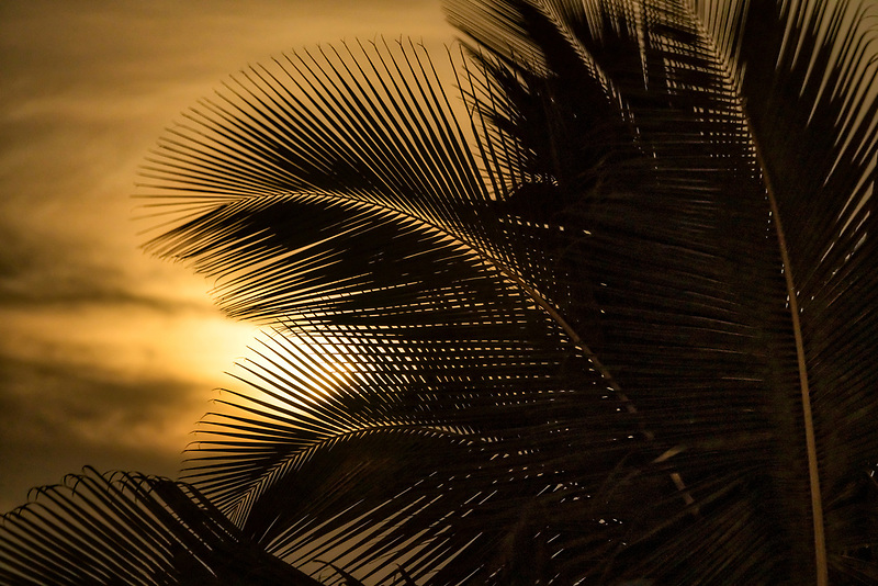 Palm tree and moon. Hawaii, The big island
