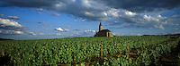 Europe/France/Rhône-Alpes/69/Rhône/Saint-Laurent-d'Oingt : Le vignoble AOC Beaujolais et la chapelle