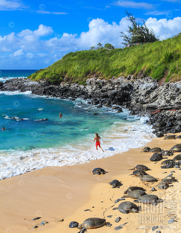 Hawaiian green sea turtles rest while people enjoy the sea at Ho'okipa Beach, Maui.