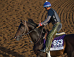 October 27, 2014:  Handsome Mike, trained by Leandro Mora, exercises in preparation for the Breeders' Cup Dirt Mile or Sprint at Santa Anita Race Course in Arcadia, California on October 27, 2014. Scott Serio/ESW/CSM