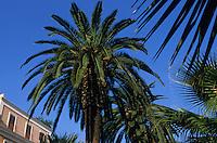 Europe/Italie/La Pouille/ Bari: Maison et Palmiers