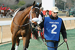 #2 Taris (KY) before the running of the Honeybee Stakes (Grade III) at Oaklawn Park in Hot Springs, Arkansas-USA on March 8, 2014. (Credit Image: © Justin Manning/Eclipse/ZUMAPRESS.com)