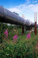 Oil pipeline, Alaska