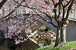 Cherry blossoms on the Charles River Esplanade, Boston, MA