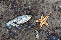A dead fish and starfish lie on the ground of a fishing dock in Jinsha island in Hebei Province. Various shapes and sizes of structures are used to try to protect this region which suffers from severe coastal erosion. China, 2019