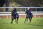 Campanelle, trained by trainer Wesley A. Ward, exercises in preparation for the Breeders' Cup Juvenile Fillies Turf and Outadore, trained by trainer Wesley A. Ward, exercises in preparation for the Breeders' Cup Juvenile Turf