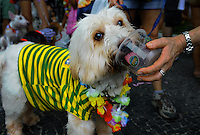 A dog dressed in a carnival costume, a T-shirt with Brazilian colours soccer team, takes part in the animals carnival, Copacabana, Brazil, February 3, 2013.