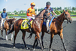 Asserting Bear(4) with Jockey Chantal Sutherland Kruse aboard at the 155th Queen's Plate at Woodbine Race Course in Toronto, Canada on July 06, 2014.