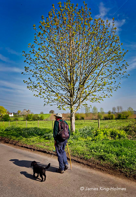Man and dog walking in English countryside