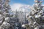 Sharkstooth, Taylor Peak, snowcapped, peaks, cloud, landscape, blue sky, forest, winter, morning, snow, Rocky Mountain National Park, Colorado, USA