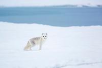 Beaufort Sea, Arctic National Wildlife Refuge, Alaska