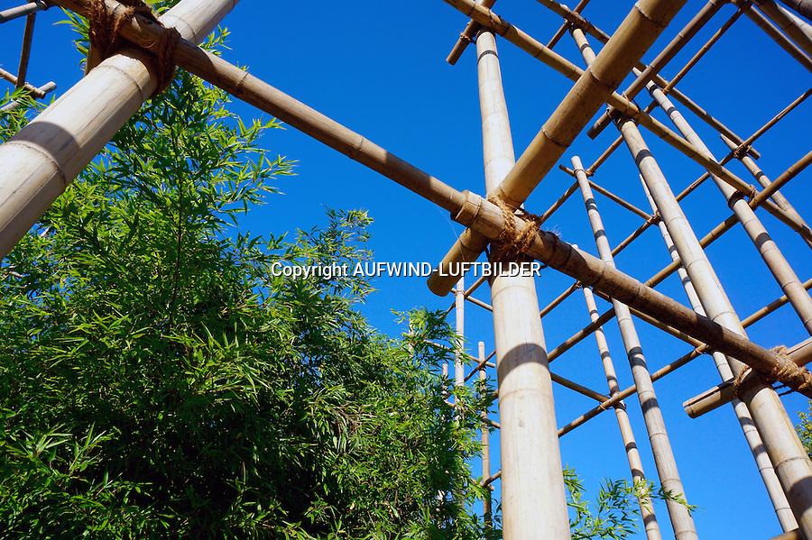 Bambus Planze und Geruest  : EUROPA, DEUTSCHLAND, HAMBURG, (EUROPE, GERMANY), 26.08.2013:Bambus Planze und Geruest